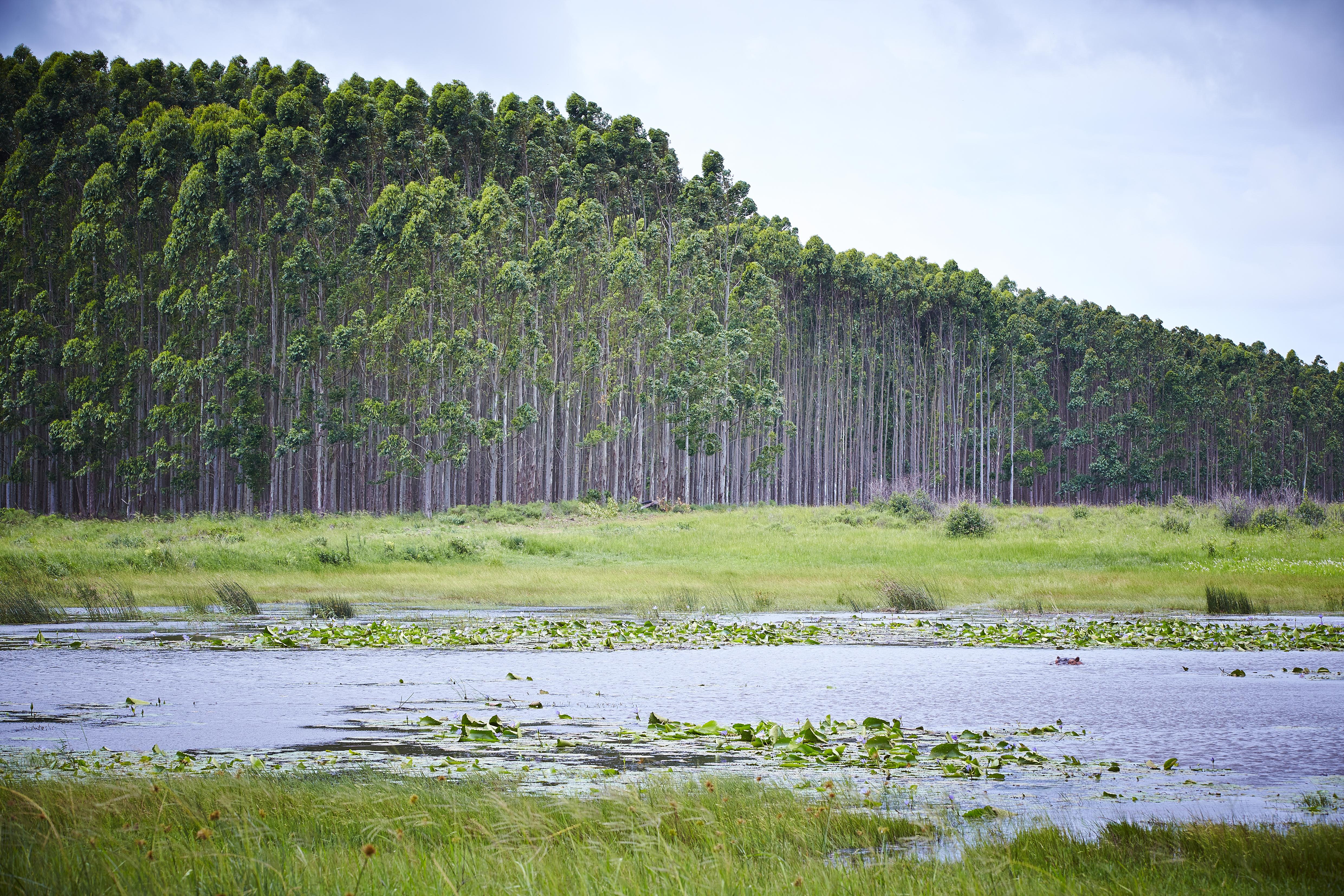 Mondi_Wetland conservation, South Africa