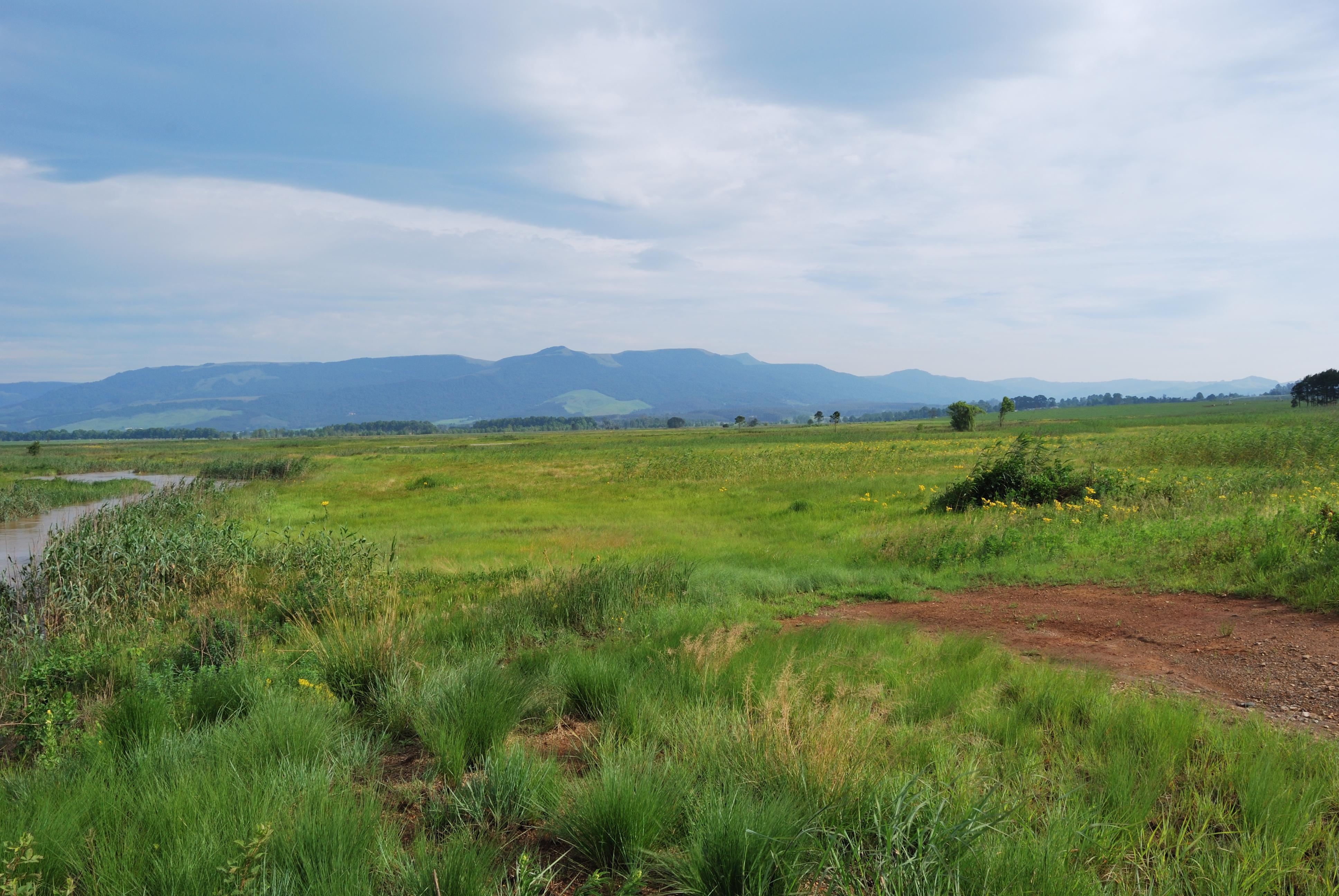 Sappi_Shafton wetland Karkloof