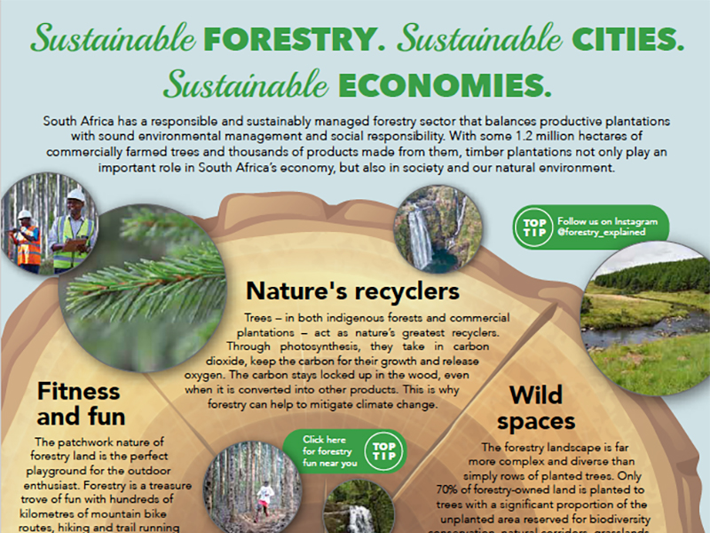 Forestry-South-Africa-Arbor-Month-eature