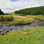 Mondi_Wetlands-conservation