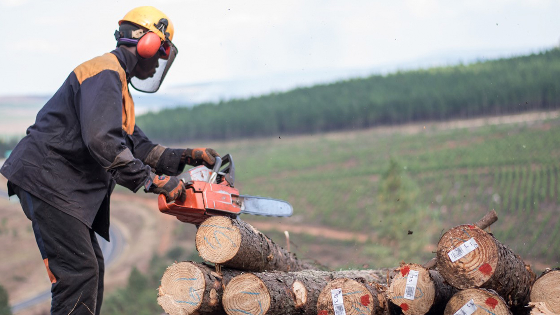 PAMSA-FW South African Forestry Sector Makes Chainsaw Training Safer With Virtual Reality1