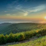 Pine-plantation-Credit-Sappi