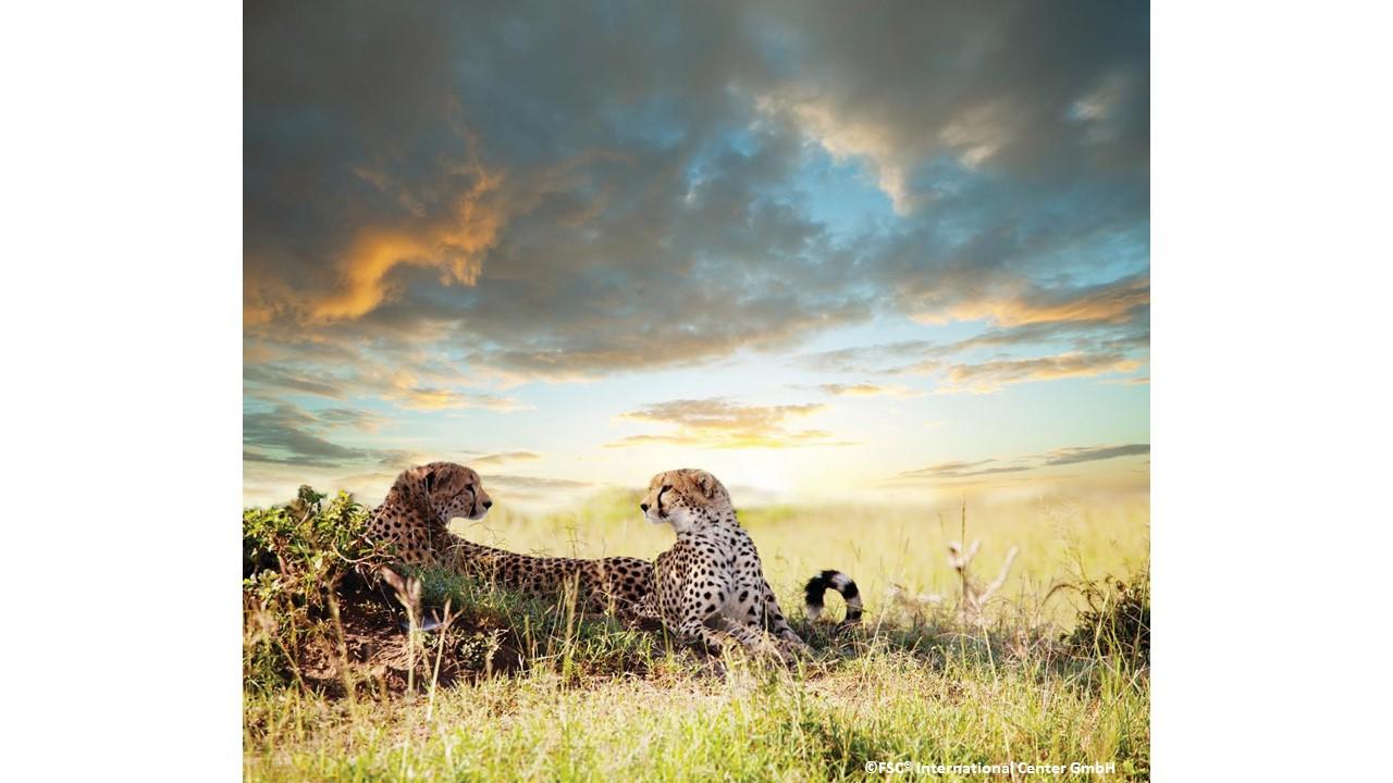 Cheetah-FSC