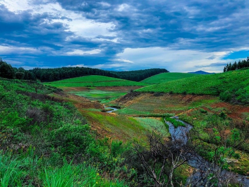 Visual: SAFCOL© A wetland area in  SAFCOL's Magoebaskloof plantation.